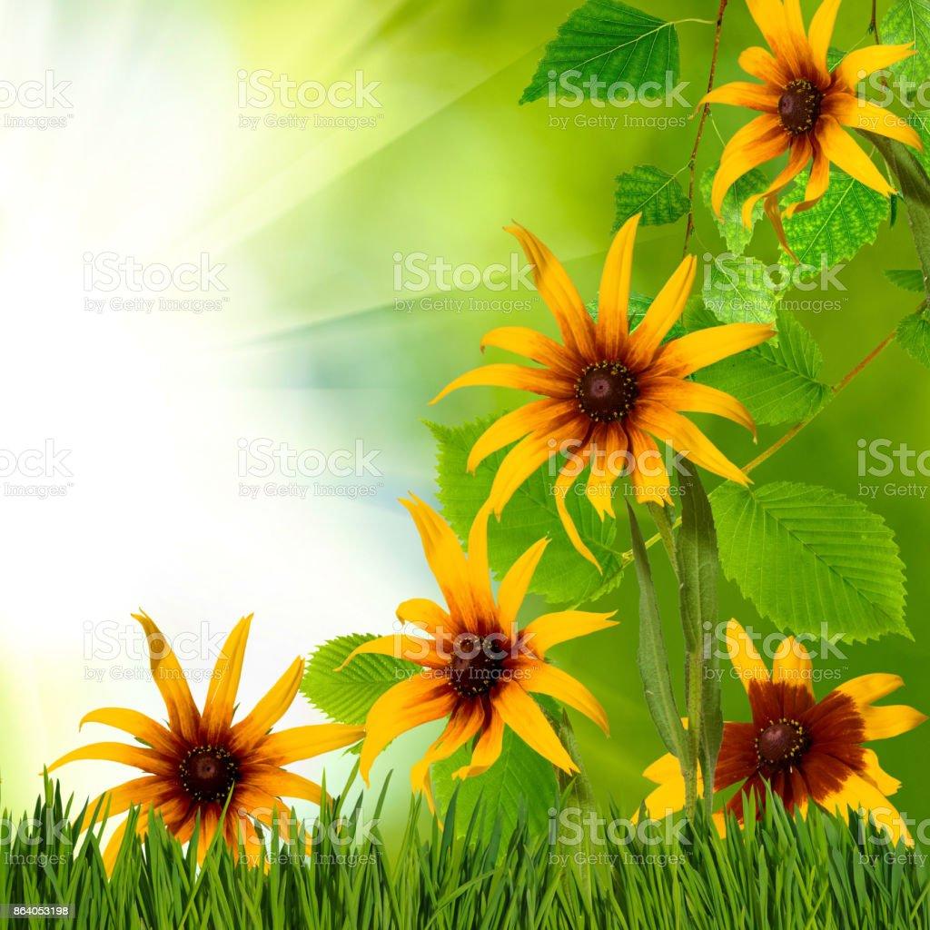 Image of beautiful flowers in garden closeup stock photo