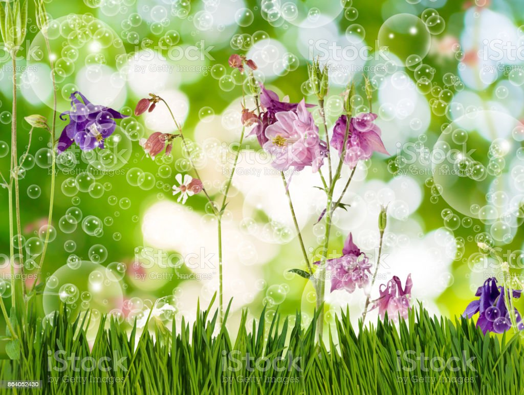Image of beautiful flowers in the garden close-up stock photo