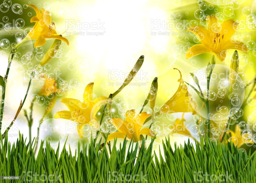 Image of beautiful flowers in the garden closeup stock photo