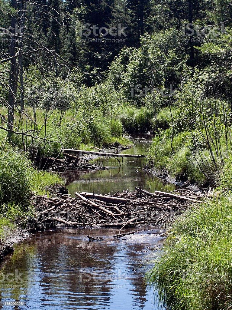 Image of beaver dam with trees all around stock photo