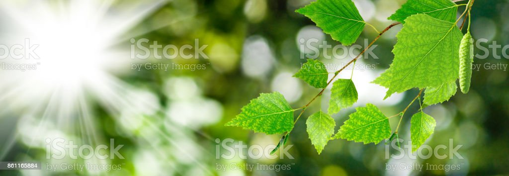 image of birch branches against the sky stock photo