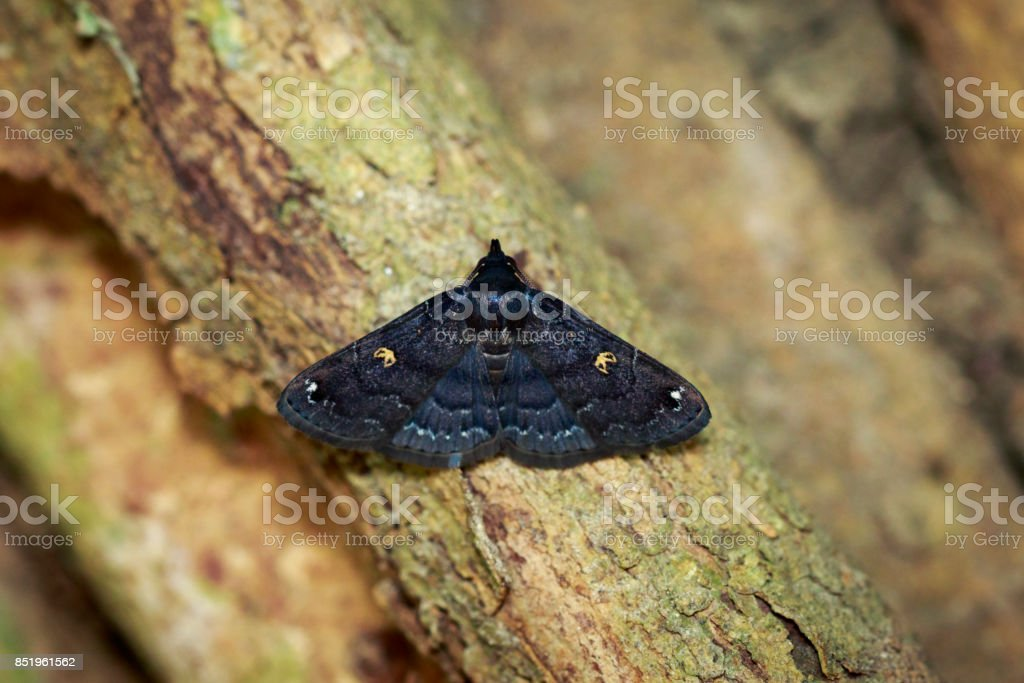 Image of black butterfly(Moth) on tree. Insect. Animal. stock photo