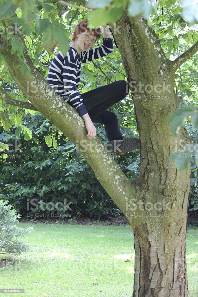 Image of boy climbing chestnut tree and sitting in branches stock photo
