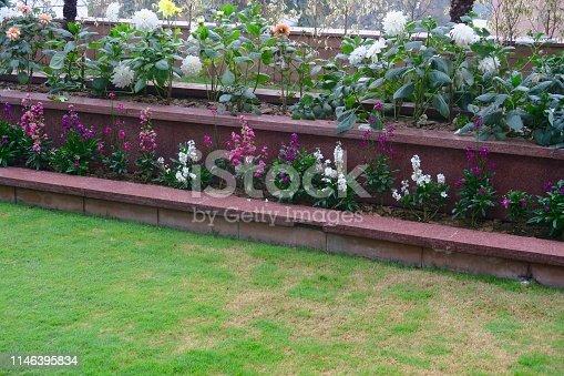 Stock photo of brick raised beds flower garden with dahlias, antirrhinum / snap dragons / dog flowers, annual summer bedding, patchy lawn grass, mossy, gardening needing fertiliser plants