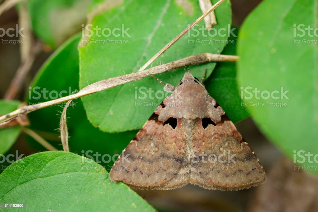 Image of brown butterfly(Moth) on green leaves. Insect Animal stock photo