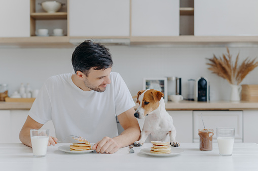 Image of brunet unshaven European man spends free time together with pedigree dog, eat pancakes in kitchen, enjoys sweet dessert, dressed casually. Breakfast, family, animals and eating concept