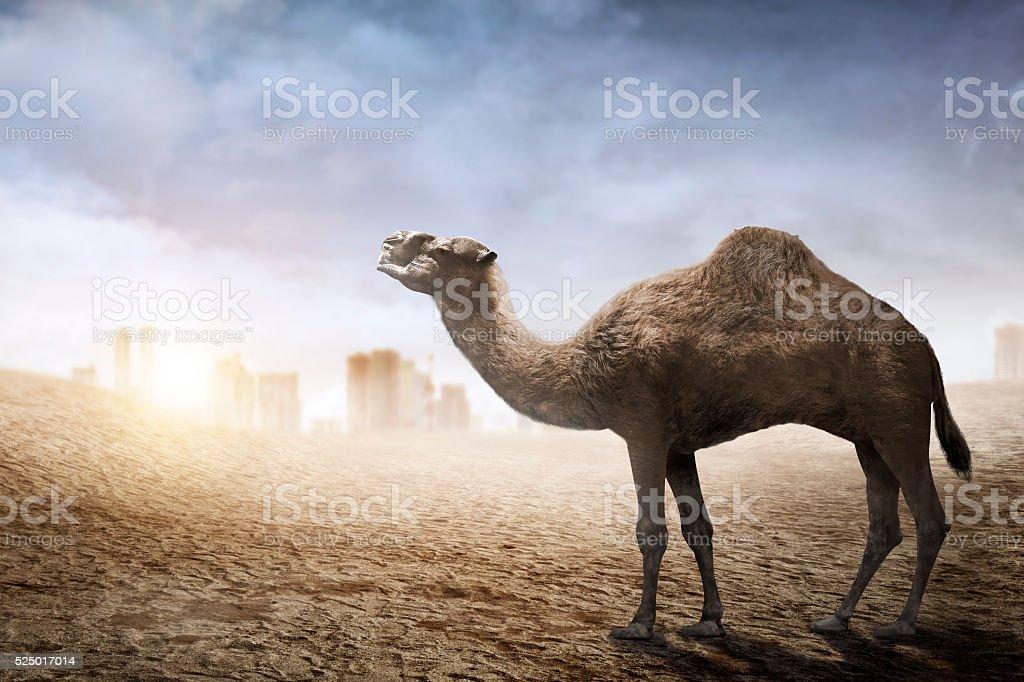 Image of camel stock photo