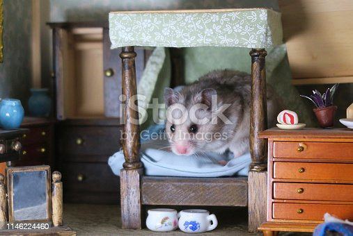 Stock photo showing a cute, silver grey hamster that has been pictured playing in a beautiful dolls house bedroom. Sitting / sleeping in the wooden four-poster bed in the centre of the dollshouse bedroom, this happy little silver Syrian hamster is pictured on the miniature duvet, with its pillows and cushions, being surrounded by toy doll's furniture in the room, such as a wooden chest of drawers, a mini wardrobe, a mirror, vases, houseplants and Victorian chamber pots under the bed.