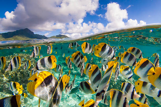 Image of divers paradise with beautiful tropical fish stock photo