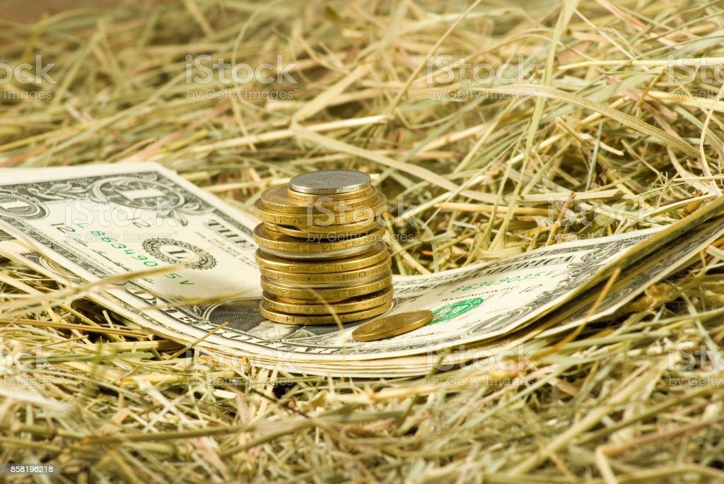 Image of dollars money on hay closeup stock photo