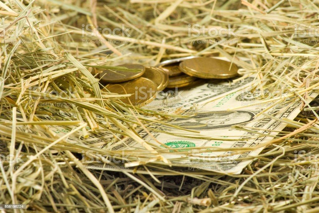 Image of dollars money on hay closeup, stock photo
