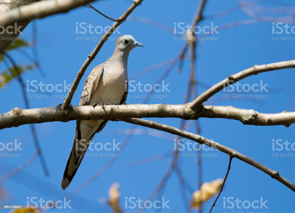 Image of dove bird perched on a tree branch. Wild Animals. foto stock royalty-free
