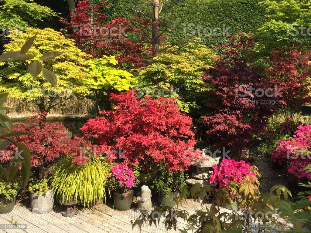 Arbre En Pot Terrasse photo libre de droit de image de jardin paysager de style