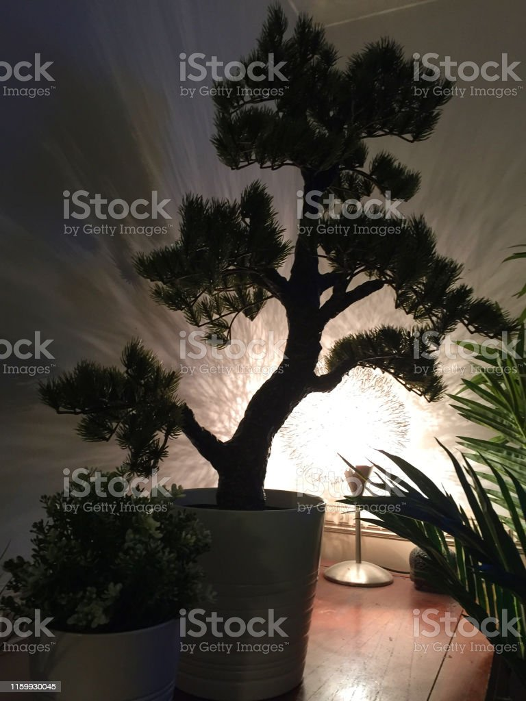 Image Of Fake Artificial Japanese White Pine Bonsai Tree Silhouette Backlit With Light Shadows And Pot Plants Palm Tree Leaves Plastic Bonsai Tree Informal Upright Style Looking Realistic And Feature For Interior