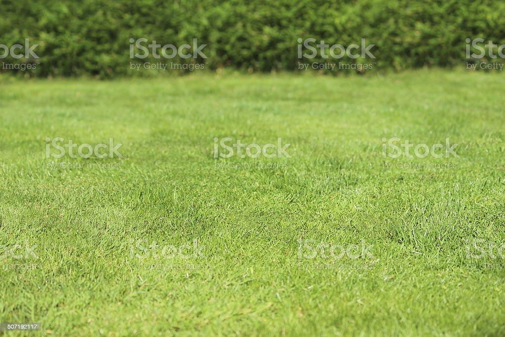Bild Der Schönen Rasen Gras Frisch Mown üppigen Grünen Rasen