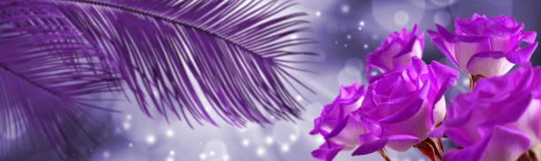 Image of flowers on a purple background picture id1141487388?b=1&k=6&m=1141487388&s=612x612&w=0&h=qdqrhcnohbgfv1xrjins0vbc0krsqrmmy1srs5akg8o=