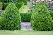Photo showing a formal knot garden, which features a series of cone topiary shapes and some neatly clipped hedging, created from box plants (boxwood / buxus sempervirens).