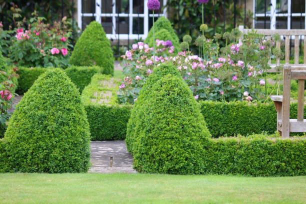 Image of formal knot garden with parterre box hedging surrounding blooming rose beds with pink flowers and paving slab footpaths stock photo
