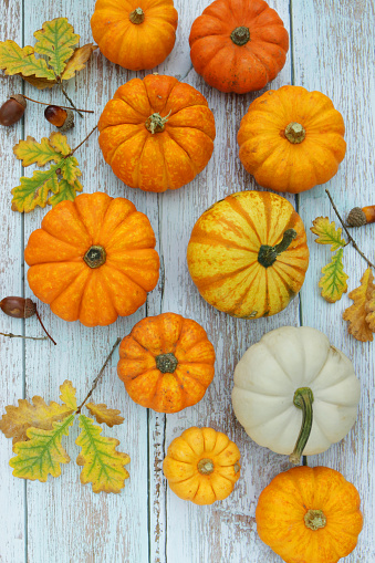 Stock photo showing elevated view of autumnal, Halloween scene of pumpkin, acorns and oak leaf arrangement on whitewashed wood grain background.
