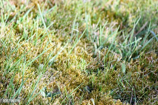 Photo showing a mossy lawn in need of attention, with patches of moss and dead grass.  The condition and colour of this garden lawn will improve with some regular mowing, watering, feeding and treating with a specialist weedkiller (weed and feed).