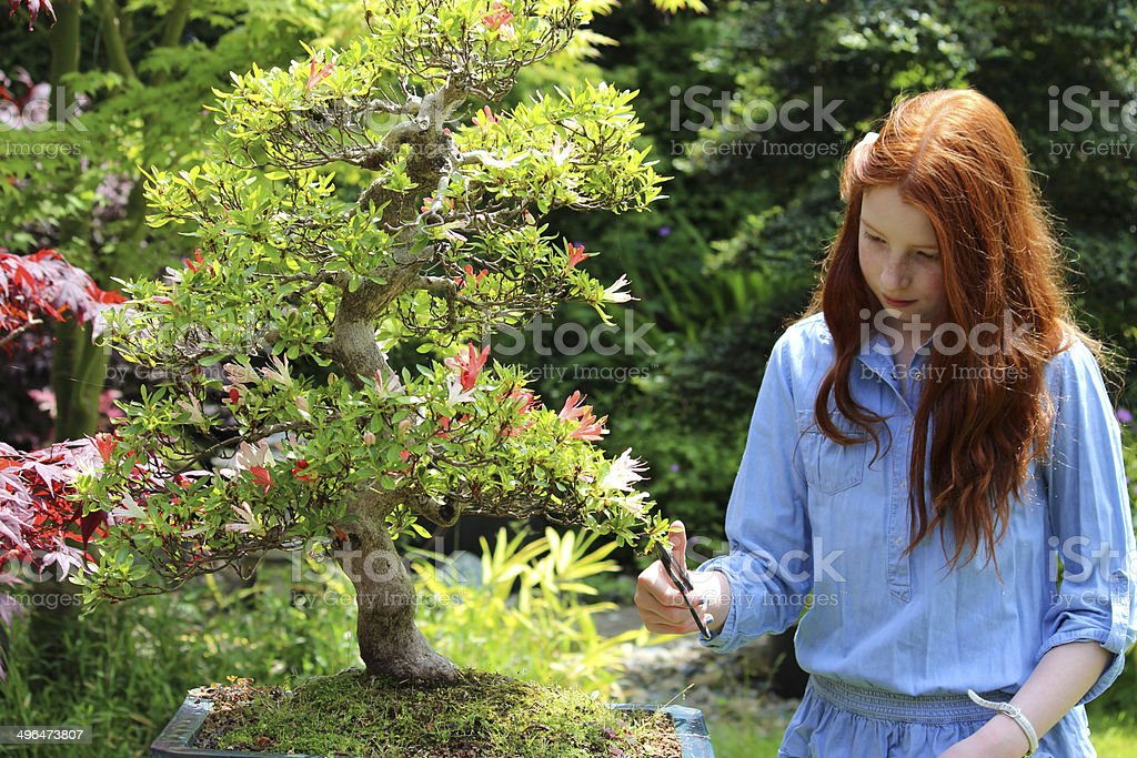 Image Of Girl Pruning Bonsai Tree Satsuki Azalea With Flowers Stock Photo Download Image Now Istock