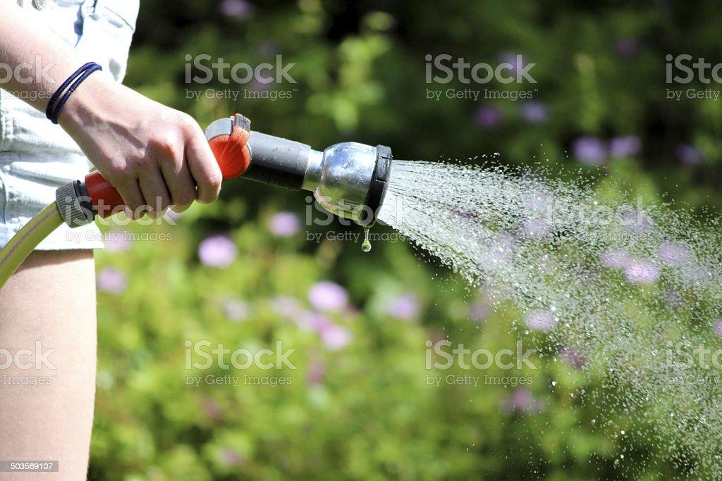 Closed hose rose
