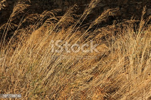 Image of golden Autumn withered grass background texture