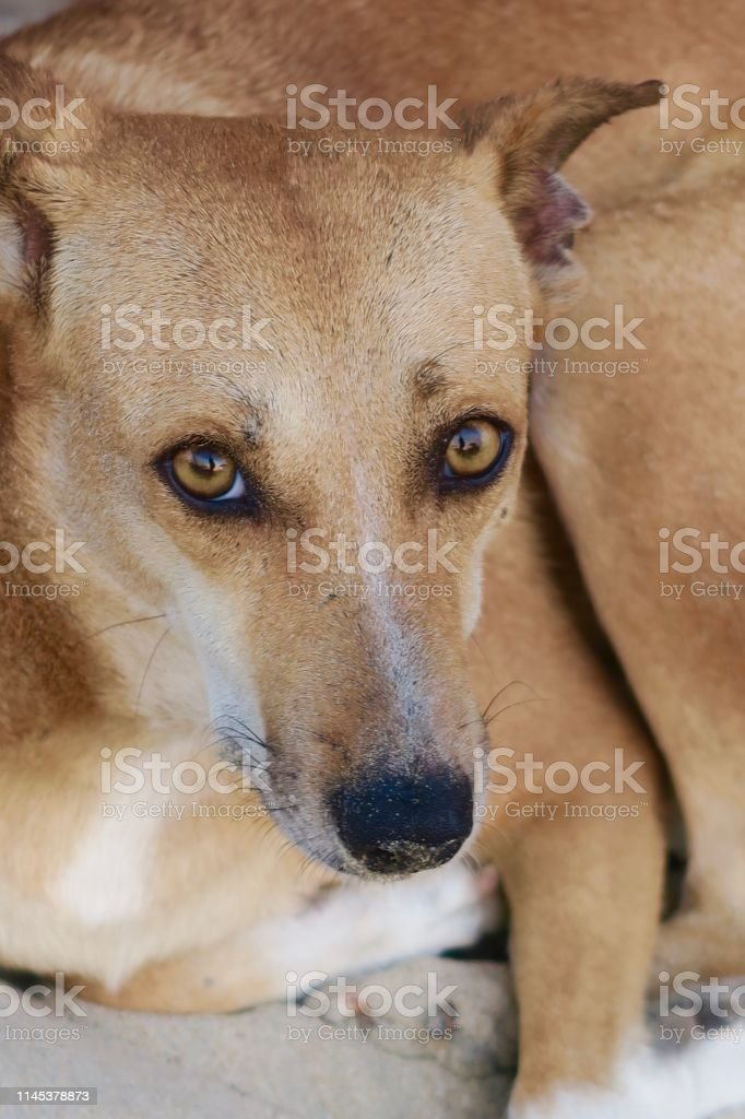 Close-up stock photo showing the sparkling eyes of a wild stray...