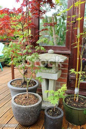 Stock photo of an oriental styled garden featuring granite Japanese lantern surrounded by potted Japanese maples (acers)
