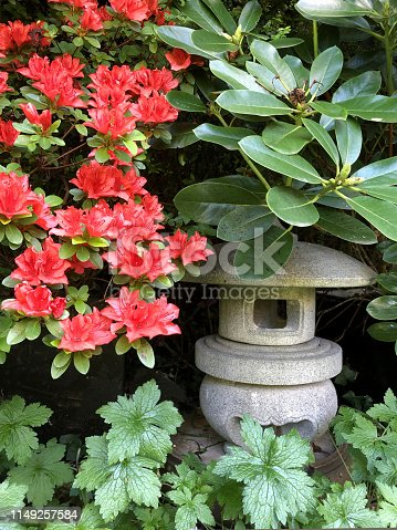 Stock photo showing ornate granite Japanese lantern pagoda, against  background of glossy green rhododendron leaves and flowering dwarf azaleas, with bright red orange  flowers / blooms. This stone granite lantern is part of a landscaped Japanese garden, being called 'maru yukimi' style (similar to marukia), with curving feet.