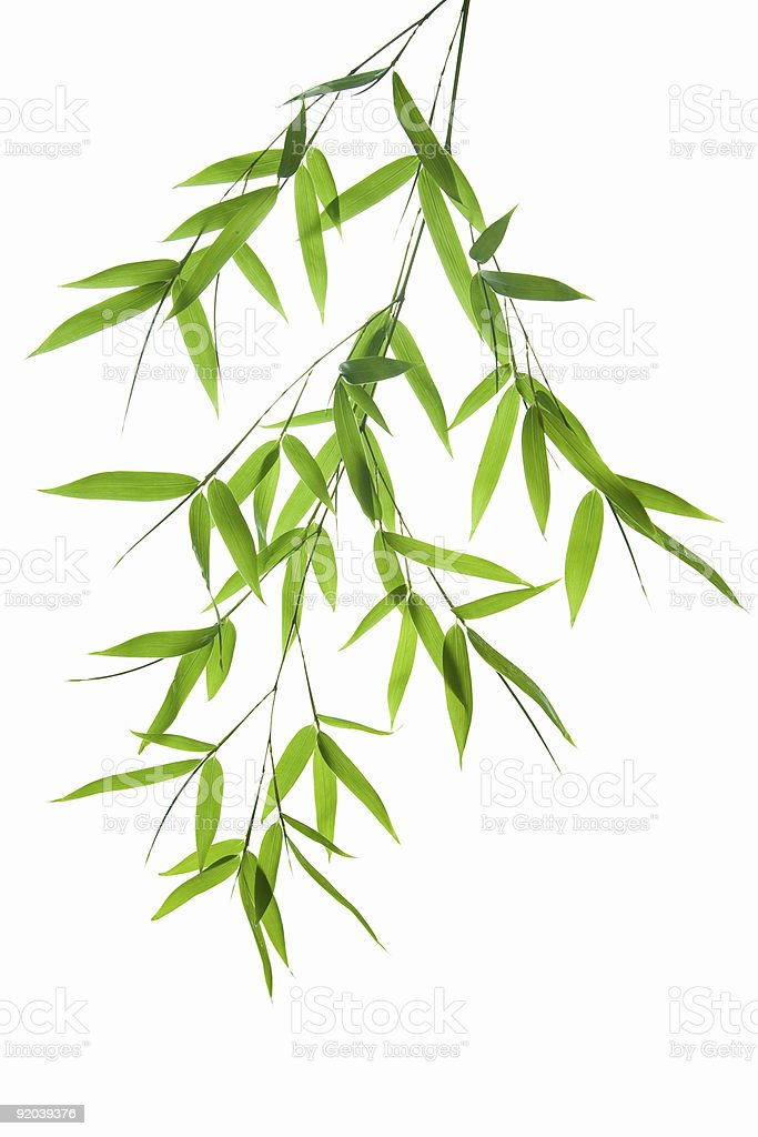 A image of green bamboo on a white background stock photo