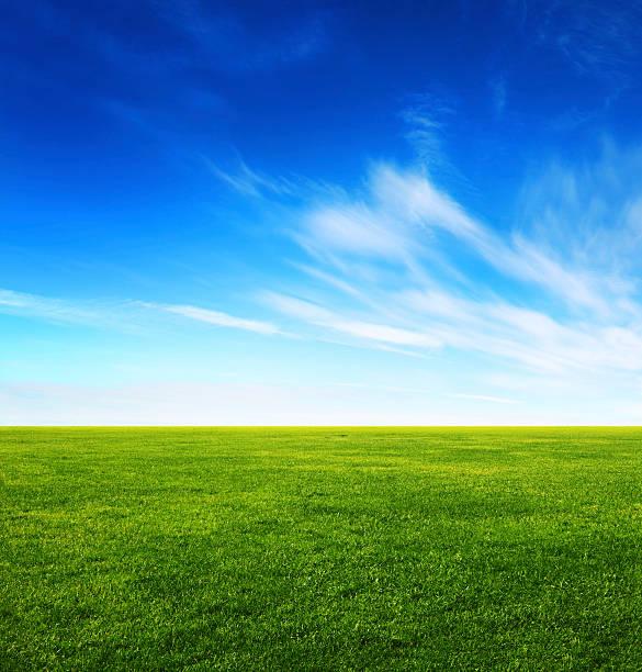 imagem de campo de grama verde e céu azul-claro - gramado terra cultivada - fotografias e filmes do acervo