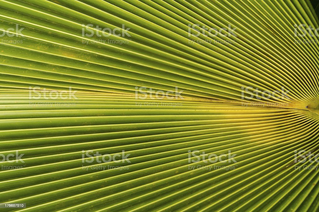 image of Green Palm leaves in nature royalty-free stock photo