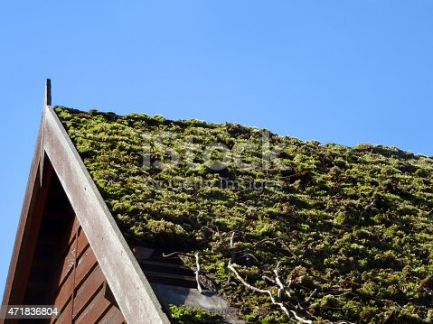 Photo showing a living roof of green moss on the top of a wooden garden shed, known to many as 'green roofing'.   A carpet of sedum plants is another popular way to achieve this naturalistic affect.
