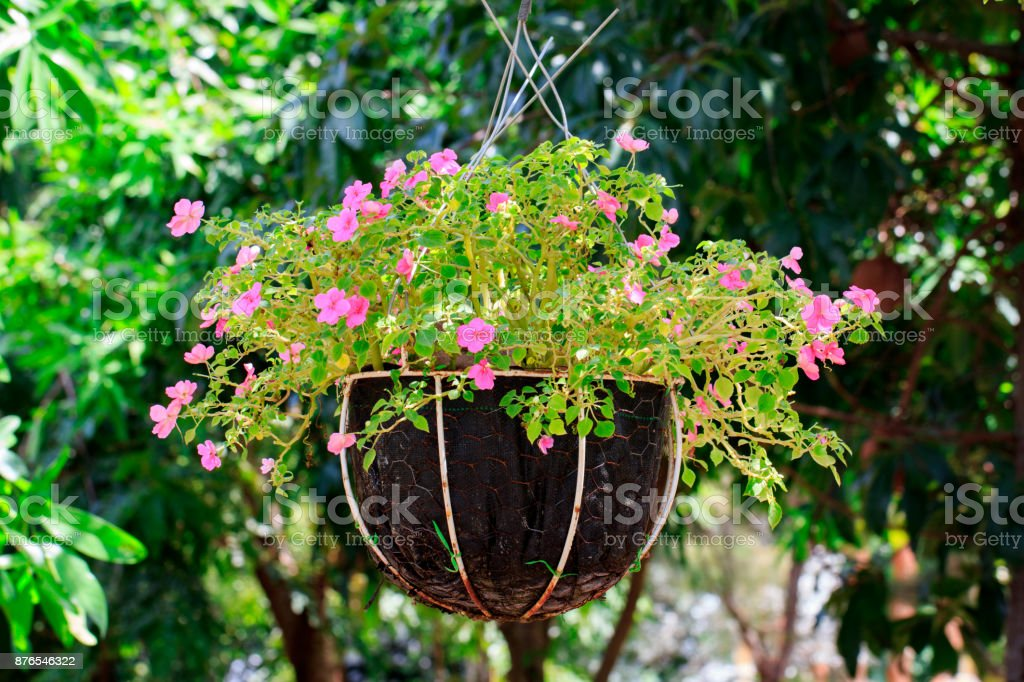 Image of hanging basket of flowers in the garden.