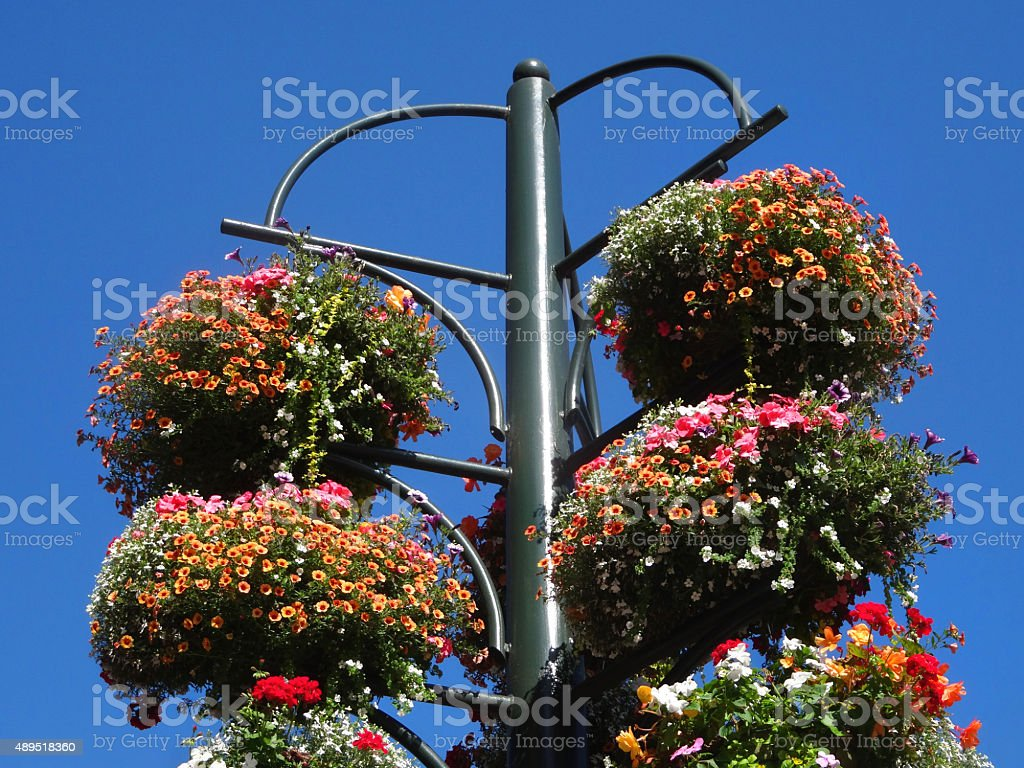 Image of hanging basket stand with trailing flowers, geraniums, begonias stock photo