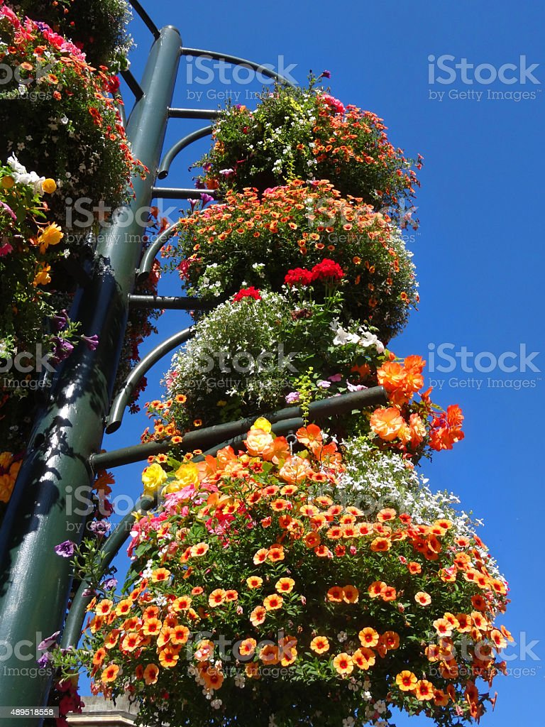 Image of hanging baskets on metal stand with orange-red flowers stock photo