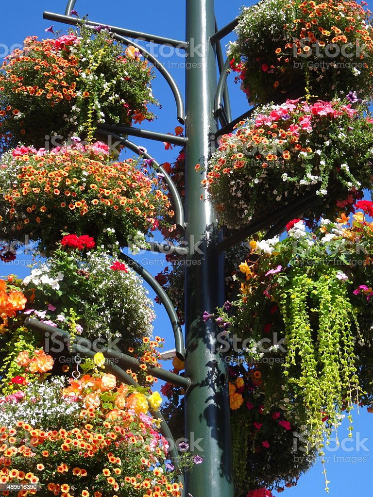 Image of hanging baskets on pole stand covered with flowers stock photo