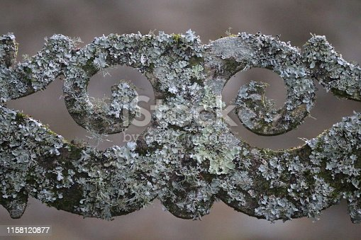 Stock photo of historic, ornate garden gateway detail of ornamental, decorative rusty wrought ironwork swirls covered in green moss and silver lichen, close-up isolated against blurred background