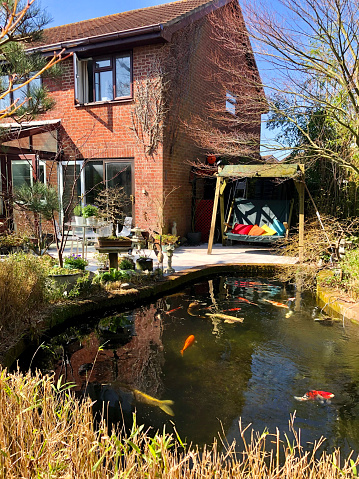 Image of home exterior, garden decking patio by house with green swing seat beside koi pond surrounded by bamboo hedge, red and white koi carp fish swimming in clear water