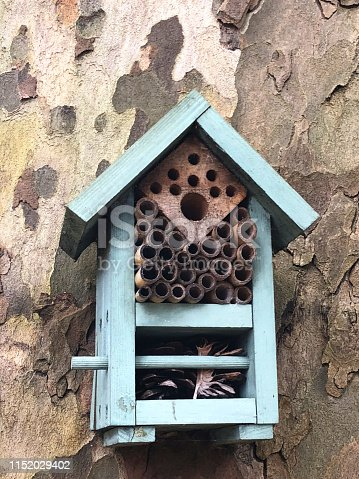 Stock photo showing homemade turquoise blue insect house for bees, bugs, butterflies, ladybirds / ladybugs, insects, hanging on tree trunk in garden like bird nest box, wood bug hotel and insect habitat with cut bamboo canes providing shelter in rain, winter weather