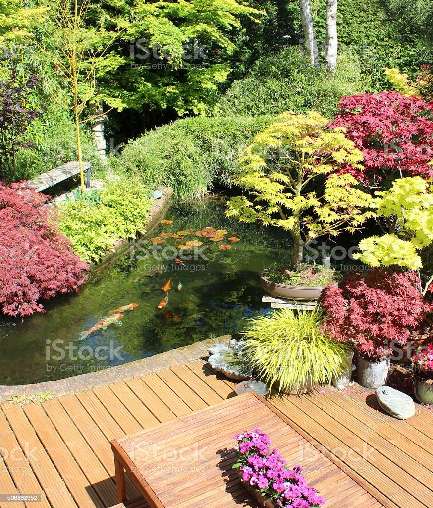 Immagine di giapponese giardino con laghetto di carpe for Laghetto giapponese