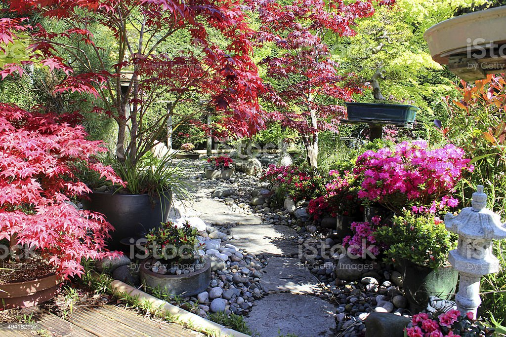 Image of Japanese garden with bonsai trees, maples, stepping stones stock photo