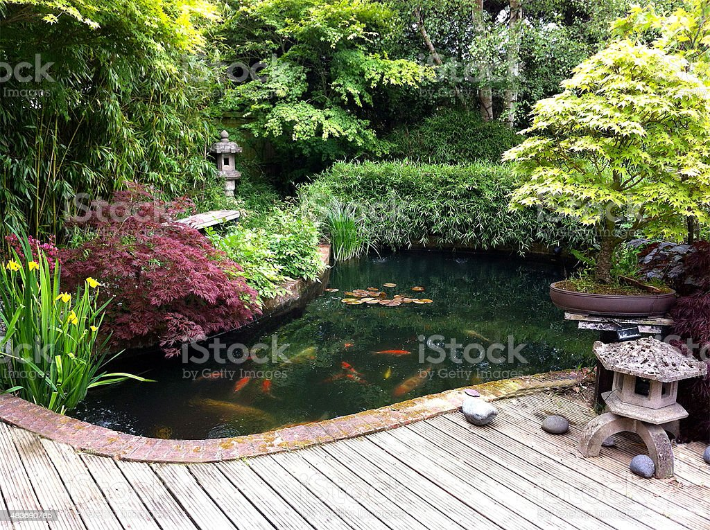 Image of japanese garden with koi pond bamboo maples for Koi ponds and gardens