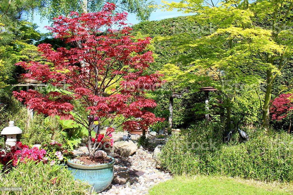 Photo De Stock De Image Du Jardin Japonais Et En Rougevert Maples