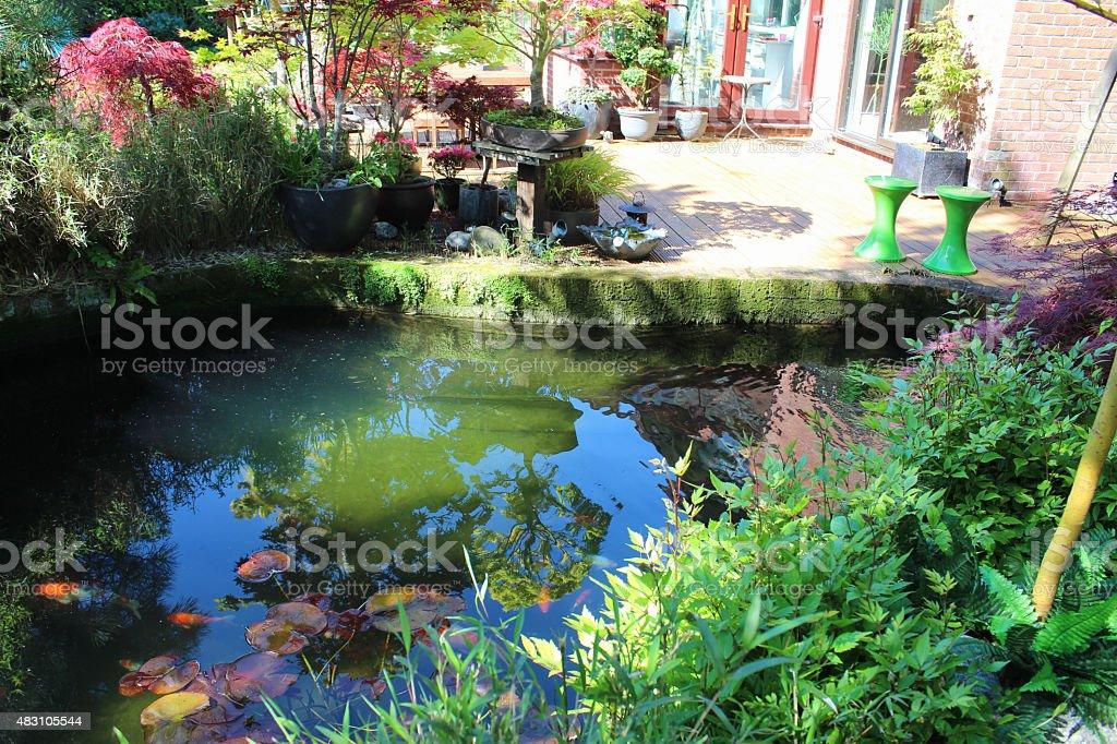 Photo libre de droit de Image Du Bassin Peuplé De Carpes Koï En  Terrassemaples Dans Le Jardin Japonais banque d\'images et plus d\'images  libres de ...
