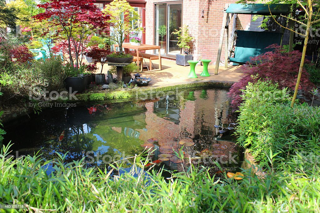 image of koi pond in japanese garden water lilies bonsai trees royalty - Japanese Koi Garden