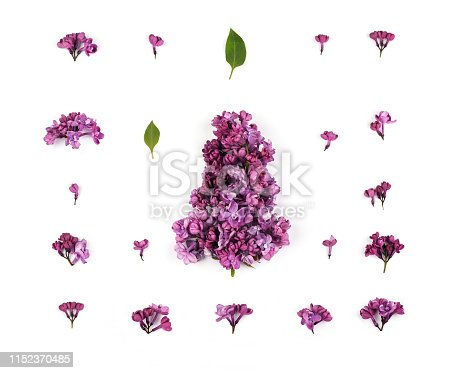 901386728 istock photo Image of  lilac flowers and petals on the white  background. 1152370485