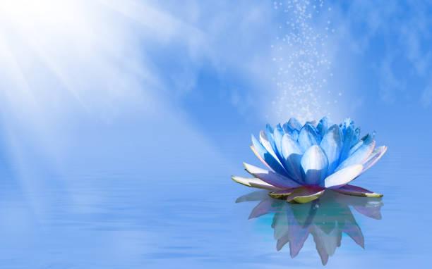 bild der lotusblume auf dem wasser - lotus symbol stock-fotos und bilder