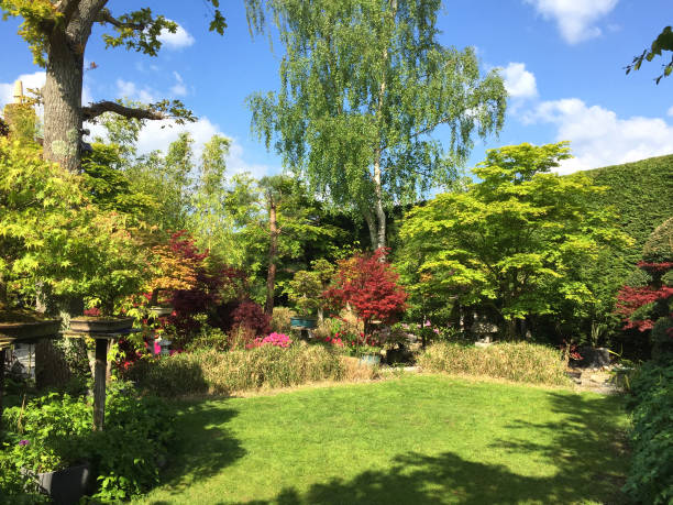 Image of lush grass garden lawn grass with full sun and shade in English oriental landscaped garden, large red Japanese maples, specimen bonsai trees, silver birch / oak trees, bamboo and azalea flowers surrounding short mown lawn just cut with lawnmower stock photo